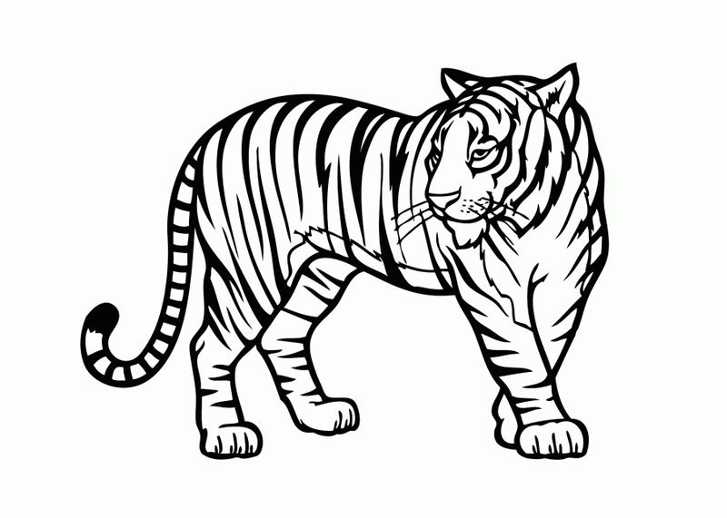 Tiger Animal Coloring Pages 1