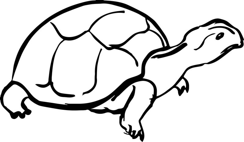 Tortoise Turtle Basic Draw Coloring Page