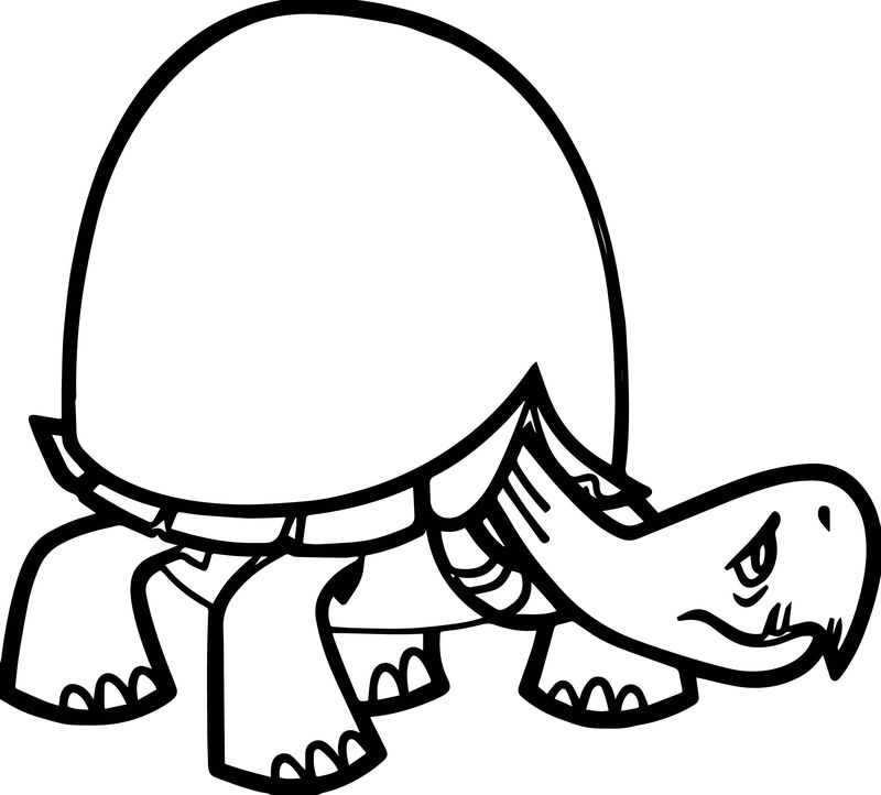 Tortoise Turtle Big Shell Coloring Page