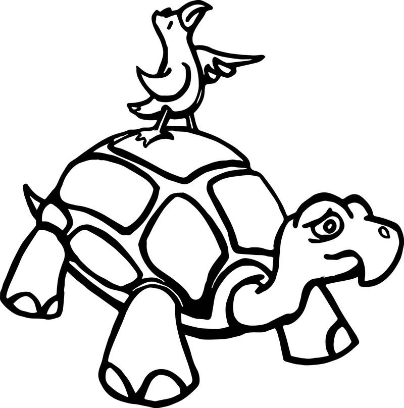 Tortoise Turtle Bird Go Coloring Page