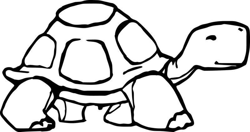 Tortoise Turtle Go Coloring Page
