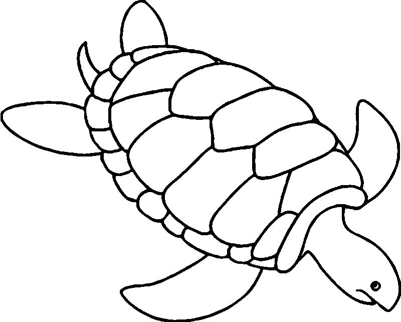 Tortoise Turtle Going Sea Coloring Page