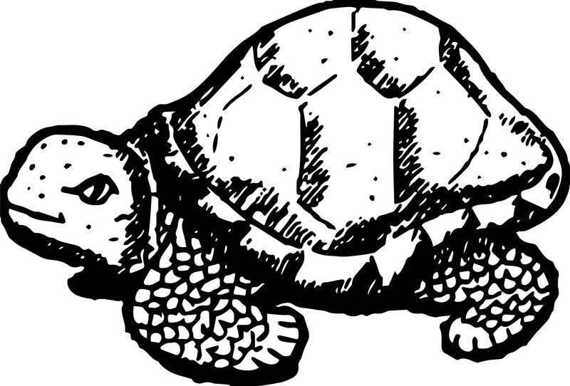 Tortoise Turtle Sketch Coloring Pages