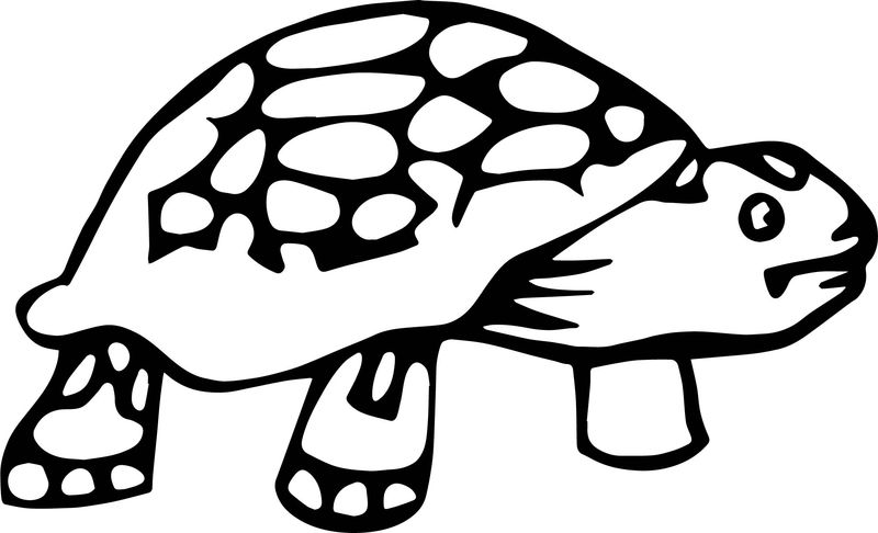Tortoise Turtle Wait Coloring Page