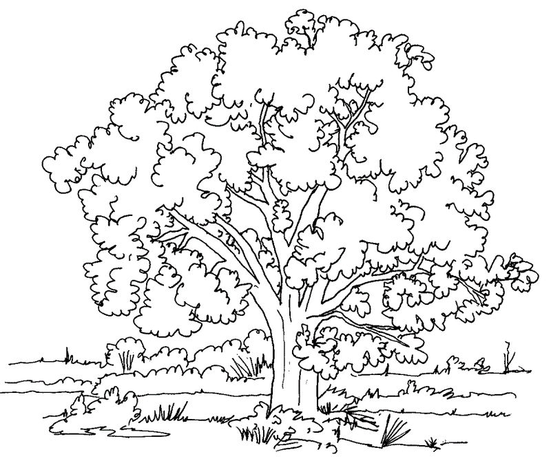 Tree Coloring Pictures