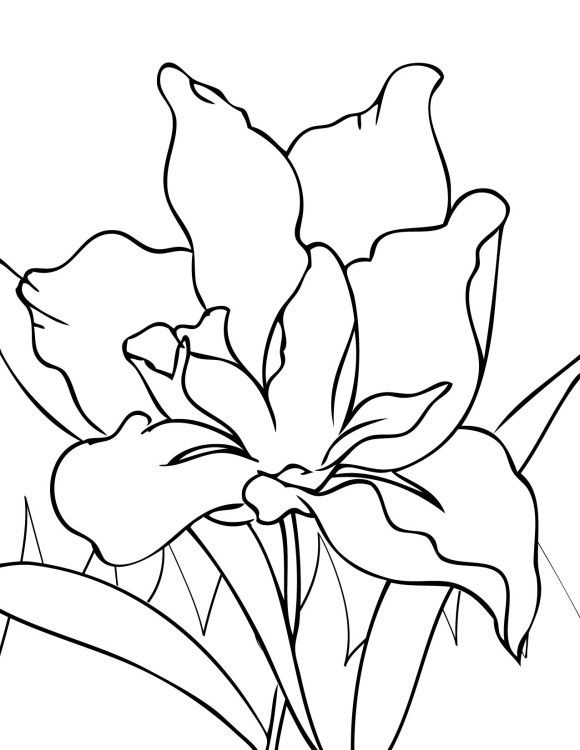 Tropical Flower Coloring Pages