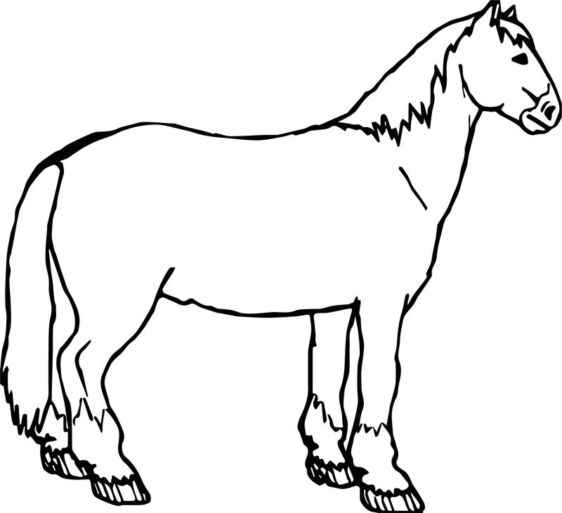 Waiting Arabian Horse Coloring Page