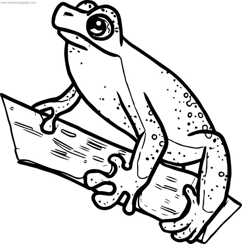 Waiting Frog Coloring Page