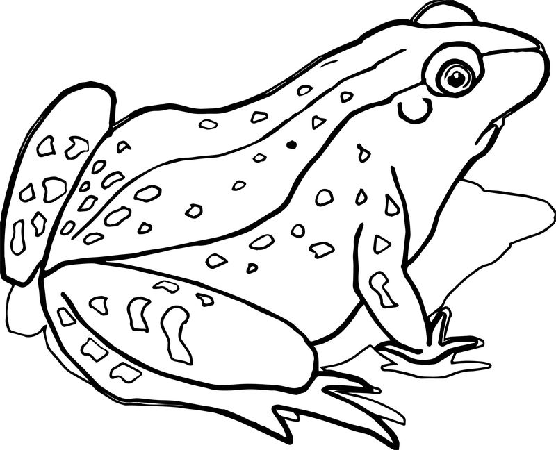 Waiting Realistic Frog Coloring Page