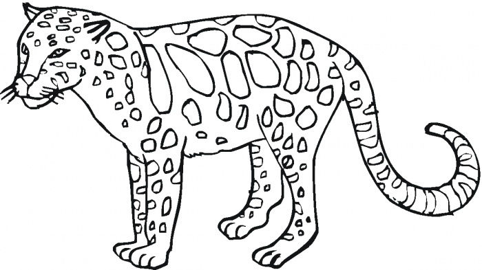Wild Animal Coloring Pages Cheetah