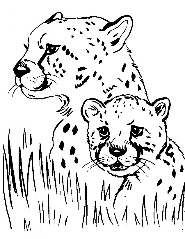 Wild Animal Coloring Pages Cheetahs