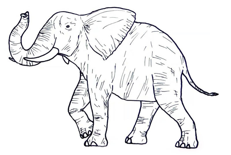 Wild Animal Coloring Pages Elephant