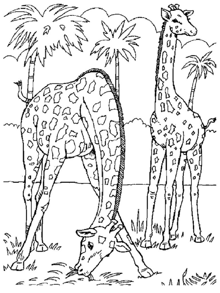 Wild Animal Coloring Pages Giraffe