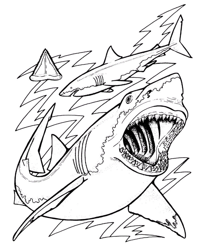 Wild Shark Coloring Picture