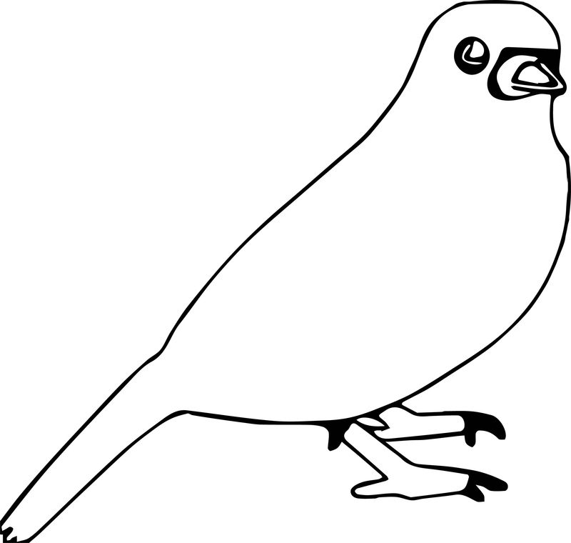 Word Bird Coloring Page