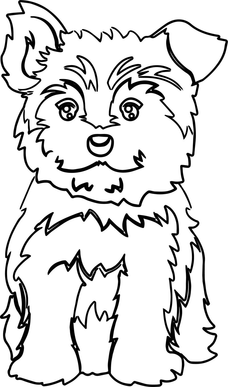 Yorkie Puppy Color Dog Puppy Coloring Page