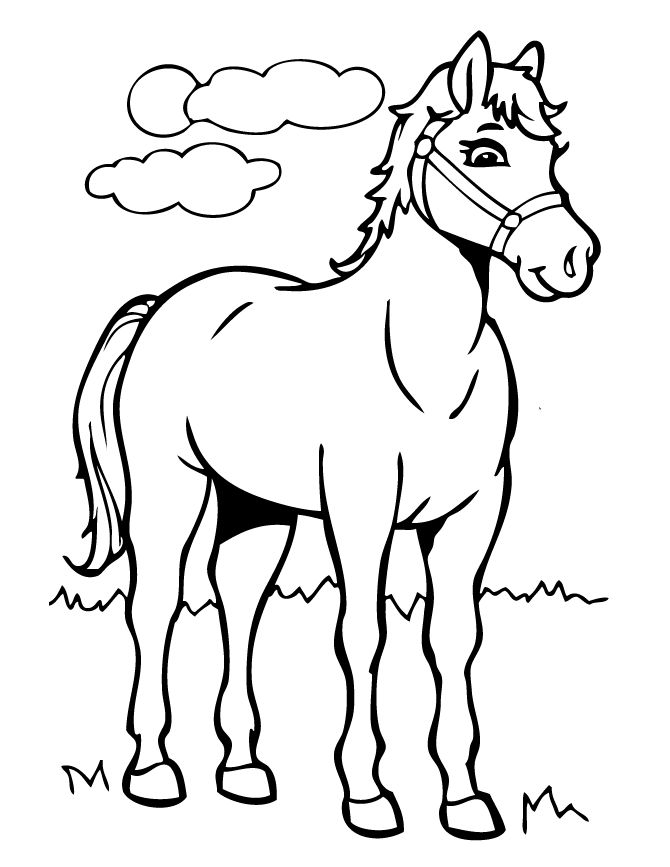 Young Horse Coloring Page