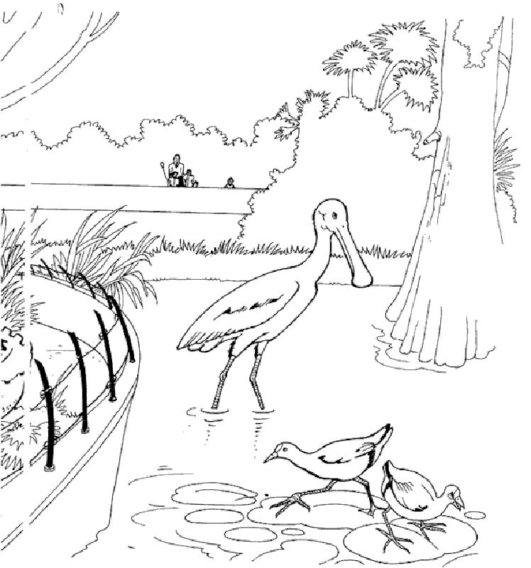 Zoo Animal Coloring Pages To Print