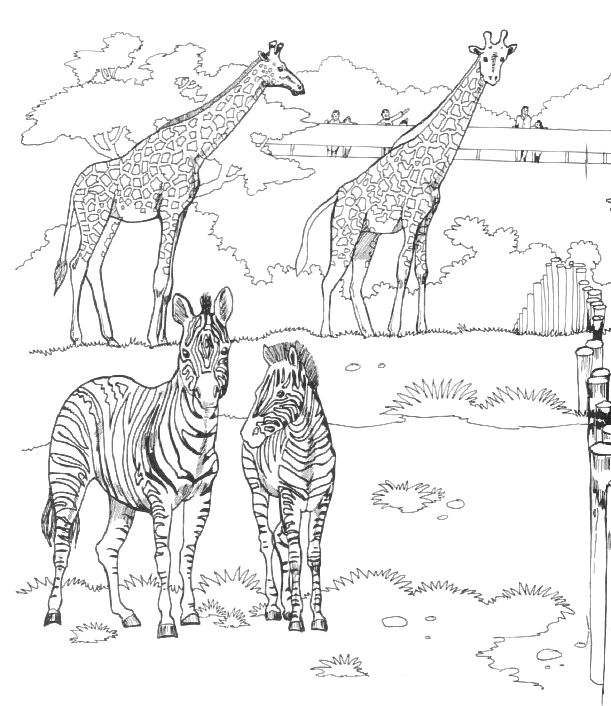 Zoo Animals Coloring Page 001